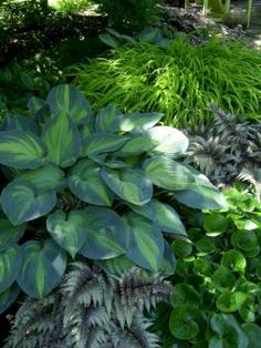 My Favorite Plant Combinations 54