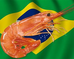 Once again, the Brazilian Association of Shrimp Breeders (ABCC) requested the Ministry of Fisheries and Aquaculture (MPA) to desist from opening the domestic market to allow the entrance of Argentinean shrimp (Pleoticus muelleri).