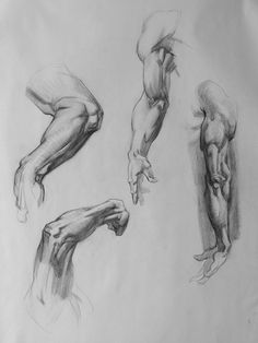 Bridgman anatomy study