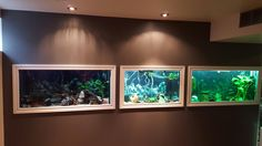 In wall fish tanks. Husband built a wall in the basement wide enough in the back to walk around and care for the fish. And framed each tank like a picture so looks like moving art. All the tanks light up the same I just didn't know how to turn the one tank on!