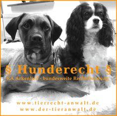 Anwalt für #Hunde, Rechtsanwalt Ackenheil, Ackenheil Anwaltskanzlei bundesweite Rechtsberatung: #Hund, #Hundebiss, #Listenhund, Einstufung gefährlicher Hund, #Kampfhund, GefahrenhundeV, Hundehaltungserlaubnis, behördliche Auflagen, #Wesenstest, #Maulkorbzwang, #Leinenzwang, Tierhalterhaftung,# Hundehalterhaftung, #Gefahrhundeverordnung, Recht rund um den Hund kostenlose Ersteinschätzung Näheres: 06136 - 762833 info@tierrecht-anwalt.de http://www.der-tieranwalt.de…