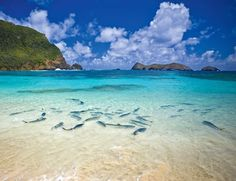 Ned's Beach, Lord Howe Island in Australia is one of the 10 best beach getaways this year.
