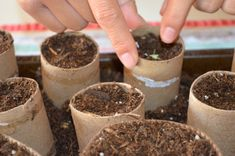What do toilet paper rolls and vegetable seeds have in common? They are the perfect container to start your seeds in. They are an inexpensive and environmentally friendly tool in which to start seeds indoors and you can plant the entire roll with the seedling out into the garden.