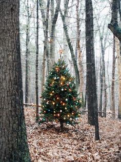 "¥ ""THINGS THAT MAKE ME STARRY EYED"".....a single tree in the forest shining its own special light."