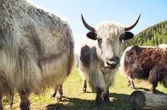 GPS spoofing can put Yik Yak in a flap