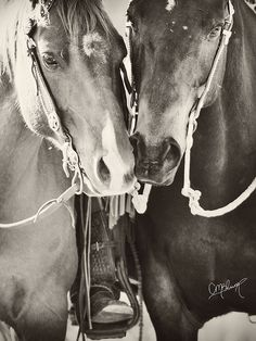 Whinney and Chex by CMBlum, via Flickr