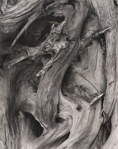 Driftwood, Maine, 1928, by Paul Strand