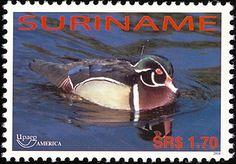 Wood Duck stamps - mainly images - gallery format