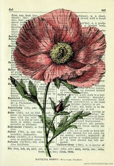 150 Antique Scientific Wildflowers Illustrations - click on image and save- you can purchase the complete illustrations if you like!