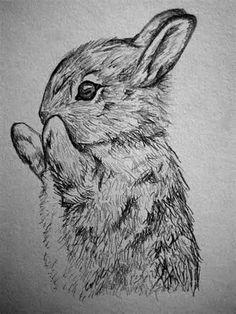 rabbit sketch - Bing Images
