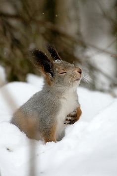 Adorable squirrel wishes you to vote for my blog :)