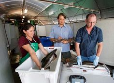 saltwater fish farming moves inland