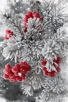 Winter Szenen, I Love Winter, Winter Magic, Flower Phone Wallpaper, Winter Wallpaper, Christmas Wallpaper, Christmas Scenery, Christmas Art, Winter Christmas