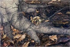 Andrew Wyeth 'Spring Beauty' 1943 by Plum leaves, via Flickr
