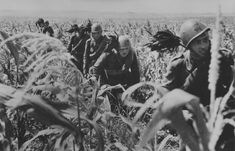 Somewhere on the Eastern Front. Italian Bersaglieri passing through a rye field.