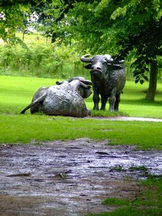 Yorkshire Sculpture Park - buffalo -Elizabeth Frink Sculpture Art, Garden Sculpture, Sculpture Ideas, Animal Sculptures, Elisabeth Frink, Yorkshire Sculpture Park, Contemporary Art, Contemporary Sculpture, Public Art