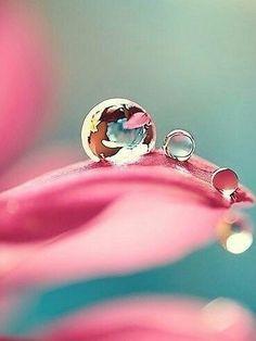 P➰ Macro/Bokeh combination Water Drop Photography, Macro Photography, Bubble Photography, Dew Drops, Rain Drops, Gota A Gota, Reflection And Refraction, Drip Drop, Fotografia Macro
