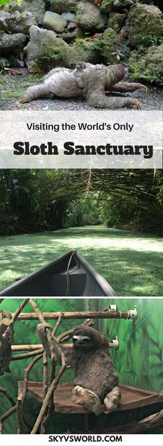 If you're visiting Costa Rica, the Sloth Sanctuary on the Caribbean Coast outside of Cahuita is an absolute must! // ecotourism