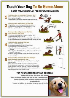 Have Dog Behavior Problems? Learn about House Training A Female Puppy and What Is Bad Dog Behavior. Dog Clicker Training, Puppy Training Tips, Training Your Dog, Potty Training, Training Collar, Brain Training, Toilet Training, Dog Minding, Easiest Dogs To Train