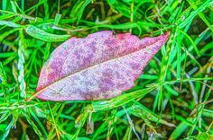 Free image download leaf | 1 million free pictures
