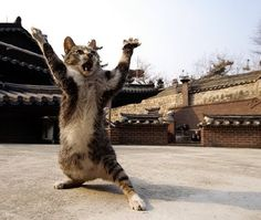 Ninja now cats