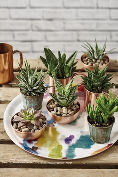 Pretty succulent display // Homemaker, Issue 42