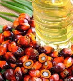Acquisti consapevoli: la lista dei prodotti che non contengono olio di palma   Ambiente Bio