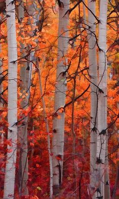 Orange and Red Autumn Leaves