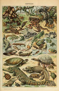 Le Larousse pour tous : Reptiles