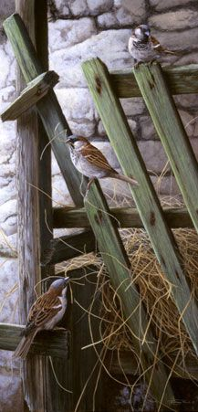 'From the horse's mouth' by wildlife artist Jeremy Paul http://www.jeremypaulwildlifeartist.co.uk/prints?album=2gallery=3nggpage=3 (barnyard, birds, farm, country life)