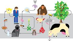 genome | ... living organism to have its complete genome sequenced this bacterium