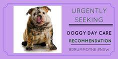 Pet owner seeking #doggydaycare #reviews http://petstayadvisor.com.au/ #DRUMMOYNE #NSW
