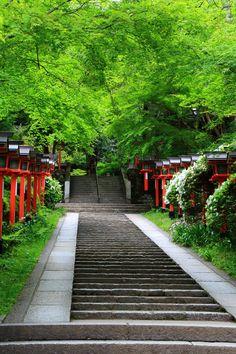 Blue maple Kurama-dera Temple in Kyoto,Japan