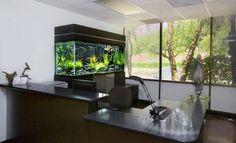 cool aquarium ideas