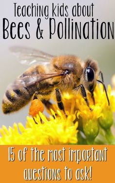 Bees and pollination - the 15 most important questions to ask! (Especially no.15!) Tips on how to teach children about the topic, and help save the bees! Combine reading, science, biology and crafts with two different projects!  Read more at:  http://www.malimomode.com/2016/03/bees-and-pollination-15-most-important.html                                                                                                                                                      More