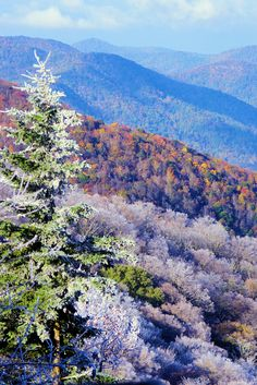 Fall mixing with winter in the Blue Ridge Mountains near Asheville, North Carolina