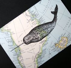 Narwhal Print on Arctic Map Greenland and Iceland  5 x by CrowBiz, $15.00 >> Love this! Super fun print!