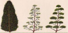 Отличие понятия «бонсай» от понятия «ниваки»