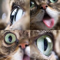 BUB sees the importance of being an eye organ and tissue donor and hopefully you do too! Over 120000 people are currently waiting for an organ. Register athttp://ift.tt/1oHTcr8 #eyeballs by iamlilbub