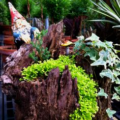 Gnome garden in a piece of a tree