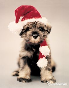 Mintie (Crossbreed) - Mintie wishes everyday was Christmas Day Merry Christmas Card Puppy Holiday Dogs Santa Claus Dog Puppies Xmas