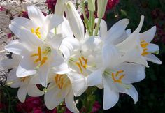 AZUCENA Mi Pequeño Mundo: Con flores a María