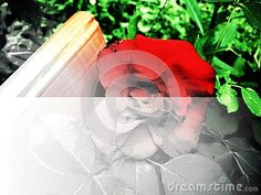 rose-background-two-tones-one-white-one-colorful-image-useful-cards-banner-stationery-wallpaper-blog-posts Rose Background, Colorful Backgrounds, Blog, Posts, Wallpaper, Cards, Image, Messages