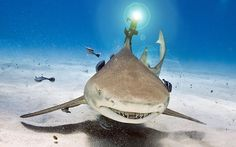 """""""sharks with frickin' laser beams attached"""""""