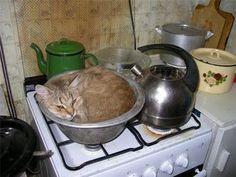 gatto in cottura