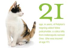 Petplan's oldest reigning policyholder, a 21-year-old cat, was insured at the ripe age of 17! Meow!