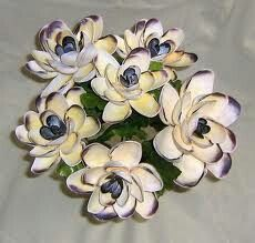 More sea shell flowers