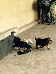 Congohounds