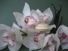 This is our macaron called Adriana. It is prepared with orchids, Bourbon vanille and bitter almonds. Very harmonious!