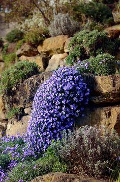 Sziklakertek építése, mire figyelj,hogyan kezdj hozzá, gyors útmutató, hogy házilag,egyszerűen kialakíthassuk az általunk megtervezett kertet.